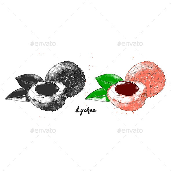 Hand Drawn Sketch Of Lychee Fruit In Monochrome And Colorful - Food Objects