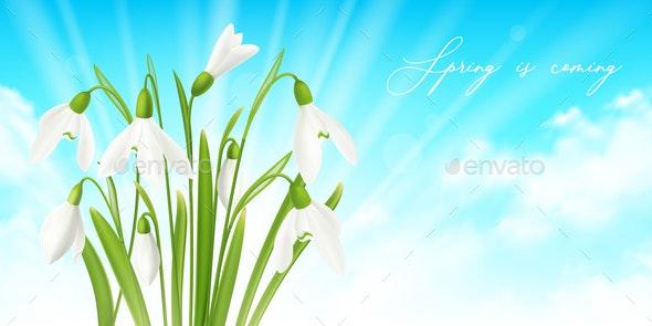 Snowdrop Flower Horizontal Background - Miscellaneous Vectors