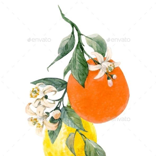 Watercolor Citrus Fruits Illustration
