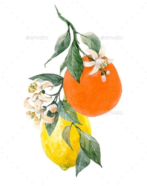 Watercolor Citrus Fruits Illustration - Miscellaneous Illustrations