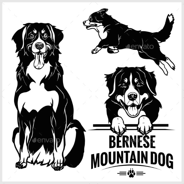 Bernese Mountain Dog - Vector Set Isolated - Animals Characters