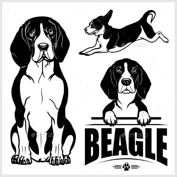Beagle Dog Vector Set