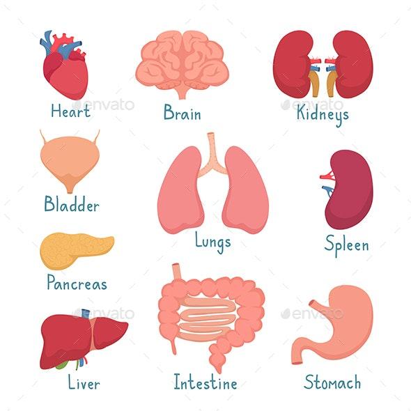 Set of Internal Organs - Miscellaneous Conceptual