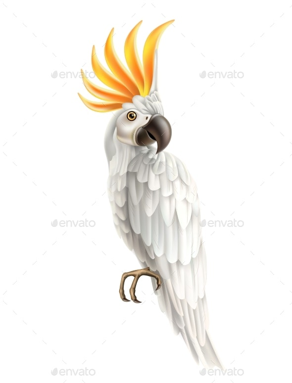 Vector Realistic Colorful Parrot Bird 3d Cockatoo - Animals Characters