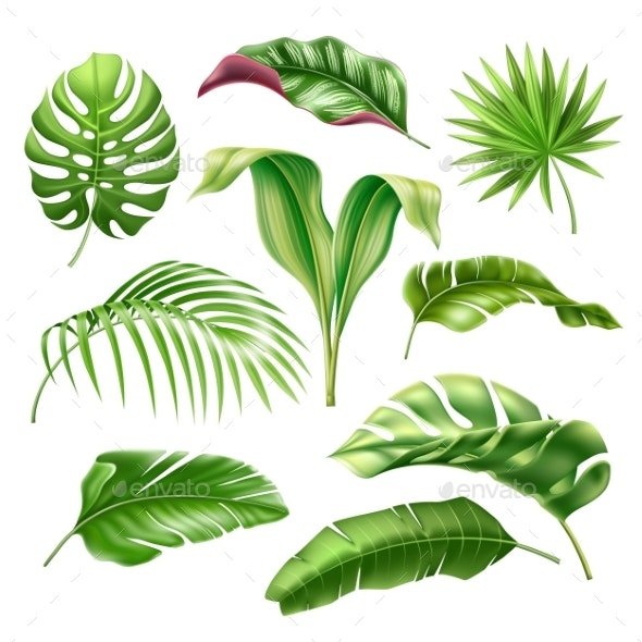 Vector Tropical Leaves Realistic Monstera Palm Set - Flowers & Plants Nature