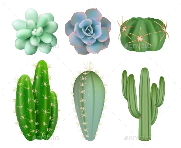 Green Cacti - Organic Objects Objects