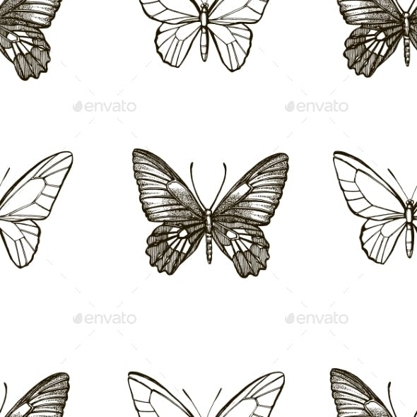 Butterflies Silhouettes. Butterfly Icons Isolated