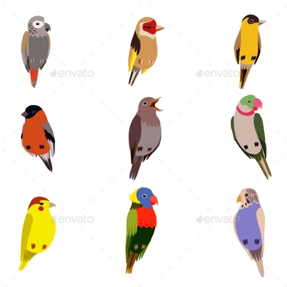 Little Birds Set, Amadin, Bullfinch, Canary - Animals Characters