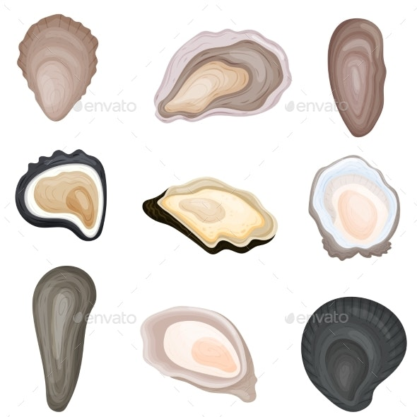 Set of Images of Fresh Oysters in Shells - Organic Objects Objects