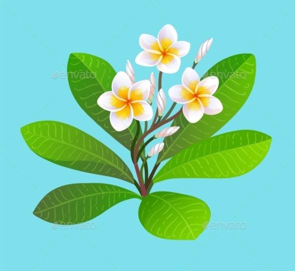 Vector Illustration of Blooming Plumeria - Flowers & Plants Nature