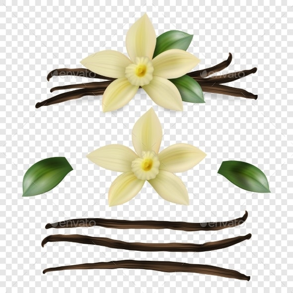 Vector Realistic Sweet Scented Fresh Vanilla - Food Objects