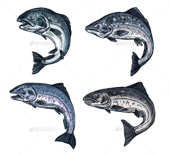 Salmon Sketch - Animals Characters