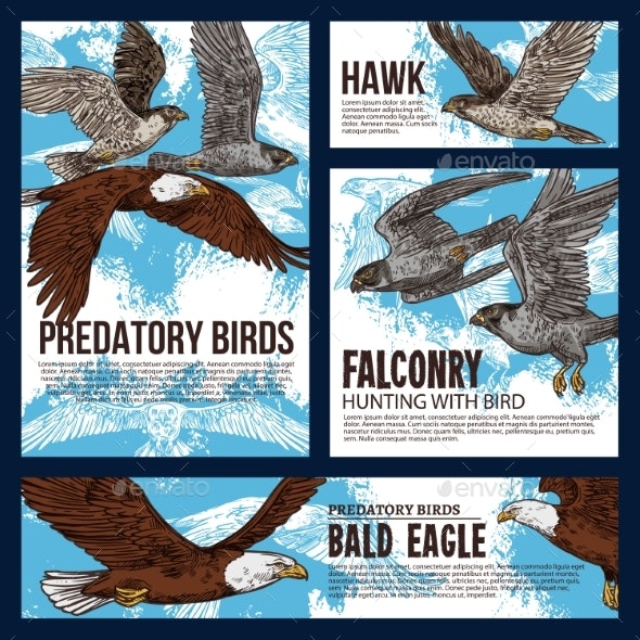 Predatory Hawk and Eagle Birds - Animals Characters