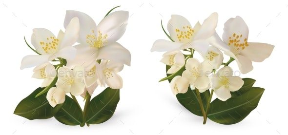 Realistic White Jasmine Flowers on White - Flowers & Plants Nature