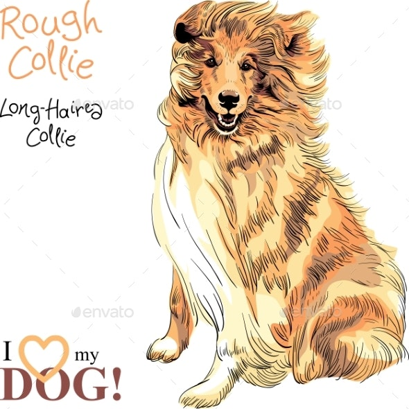 Dog Rough Collie Breed Vector - Animals Characters