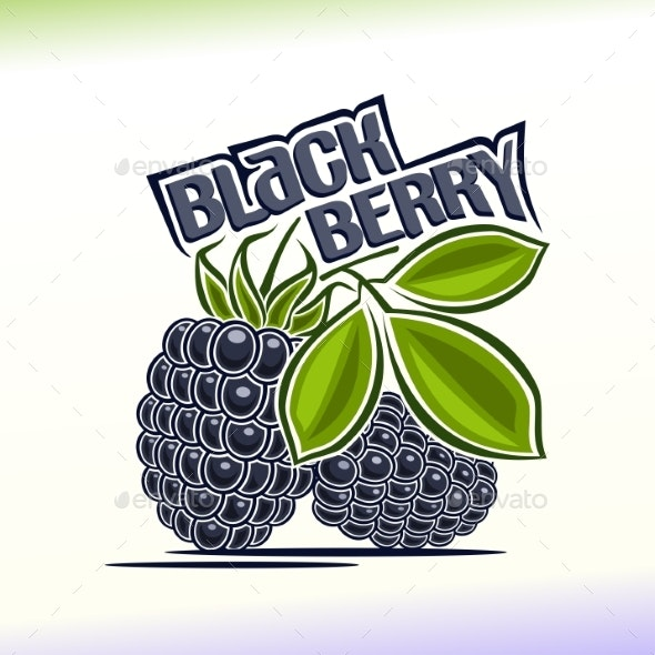 Vector Blackberry - Food Objects
