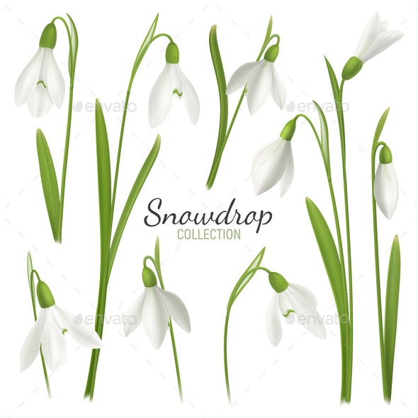 Snowdrop Flowers Collection Background - Miscellaneous Vectors
