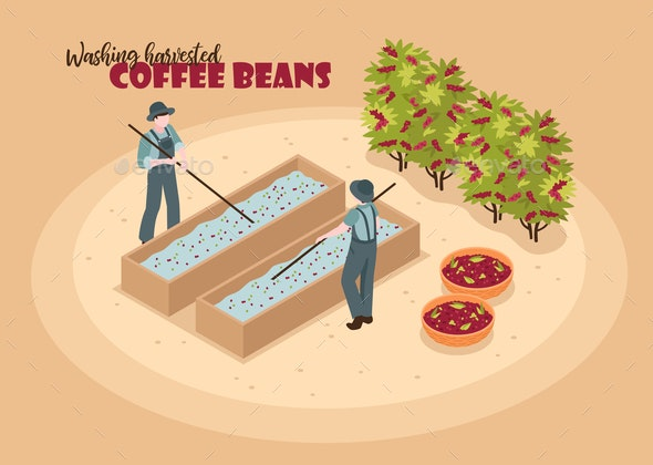 Washing Coffee Beans Background - Miscellaneous Vectors