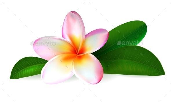Plumeria Flower - Flowers & Plants Nature