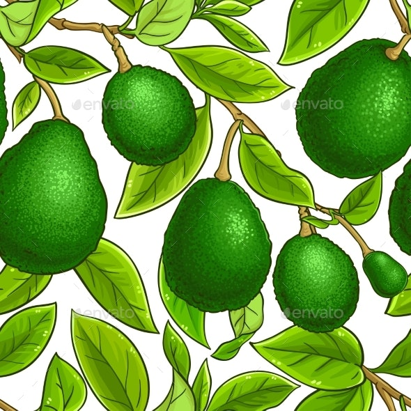Avocado Fruits Vector Pattern on White Background - Food Objects