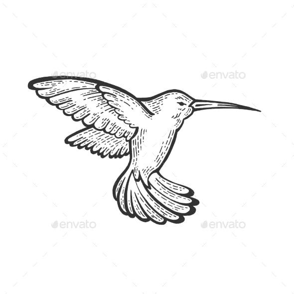 Humming Bird Sketch Engraving Vector Illustration