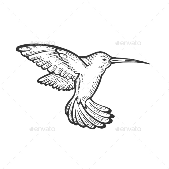 Humming Bird Sketch Engraving Vector Illustration - Miscellaneous Vectors