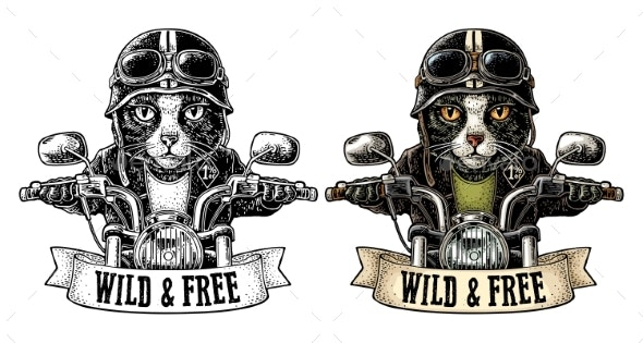 Cat Driving a Motorcycle Rides - Animals Characters