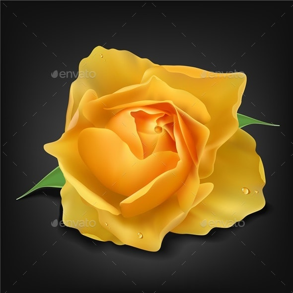 Realistic Yellow Rose - Flowers & Plants Nature