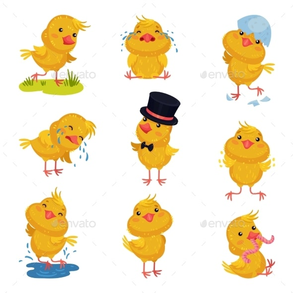 Set of Images of Little Chickens. Vector - Animals Characters