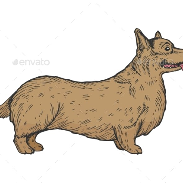 Welsh Corgi Dog Sketch Engraving Vector