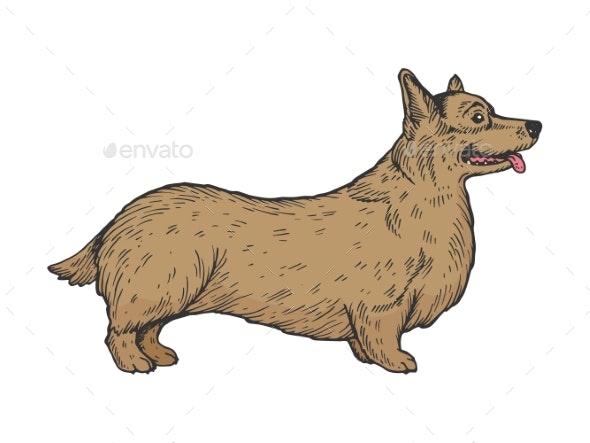 Welsh Corgi Dog Sketch Engraving Vector - Animals Characters