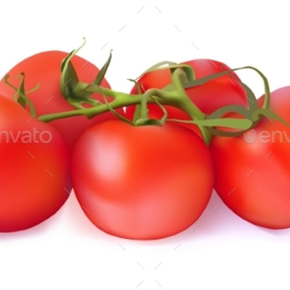 Set of Red Tomatoes on a White Background
