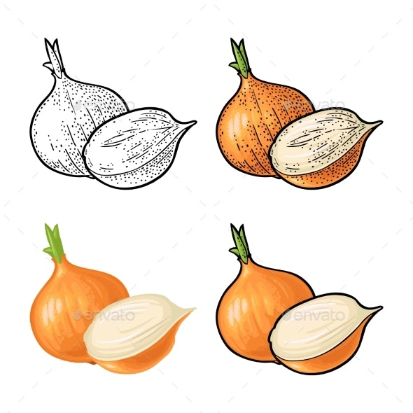 Whole and Half Onion - Food Objects