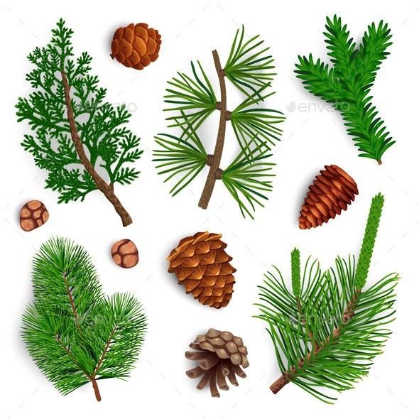 Pine Needle Cones Set - Flowers & Plants Nature