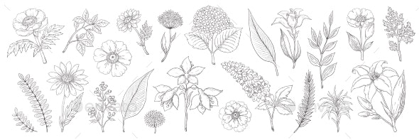 Hand Drawn Flowers - Flowers & Plants Nature