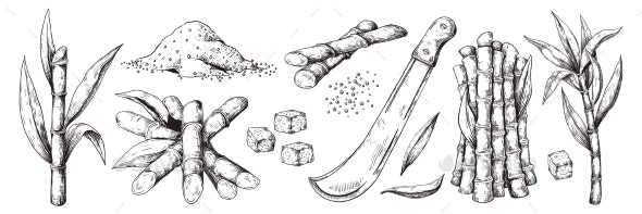 Hand Drawn Sugar Cane - Food Objects