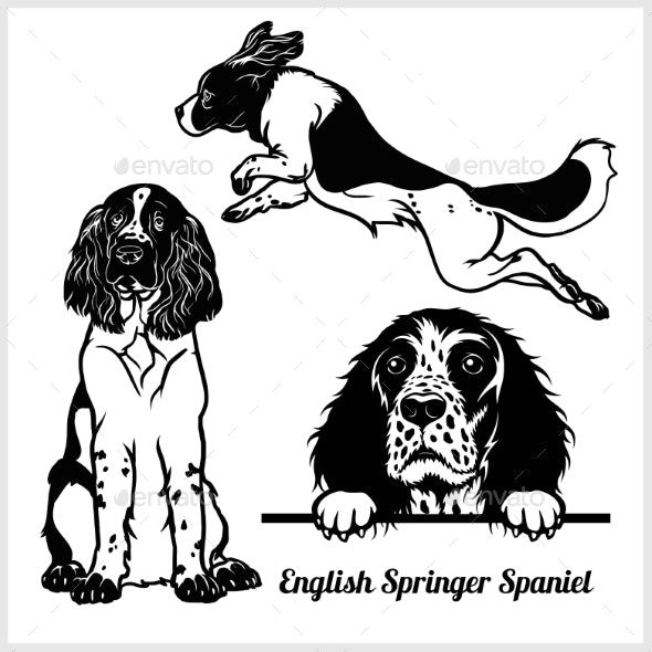 English Springer Spaniel - Animals Characters