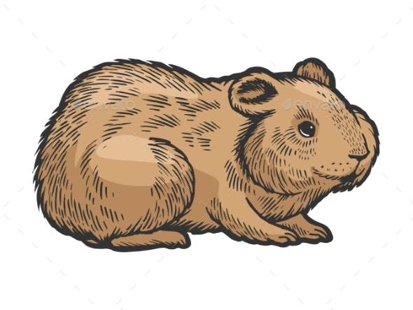 Hamster Rodent Pet Animal Sketch Engraving Vector - Animals Characters