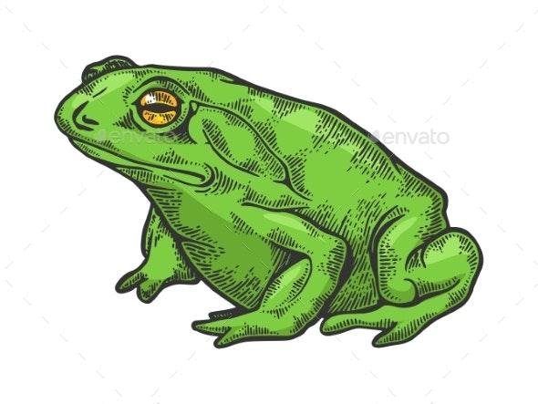 Hallucinogenic Toad Sketch Engraving Vector - Animals Characters