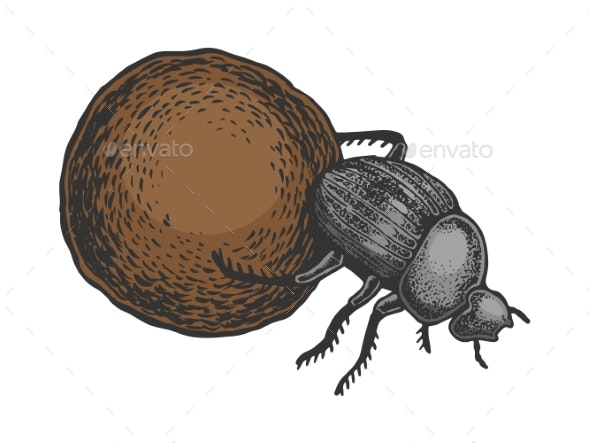 Dor Bug Beetle Color Sketch Engraving Vector - Miscellaneous Vectors
