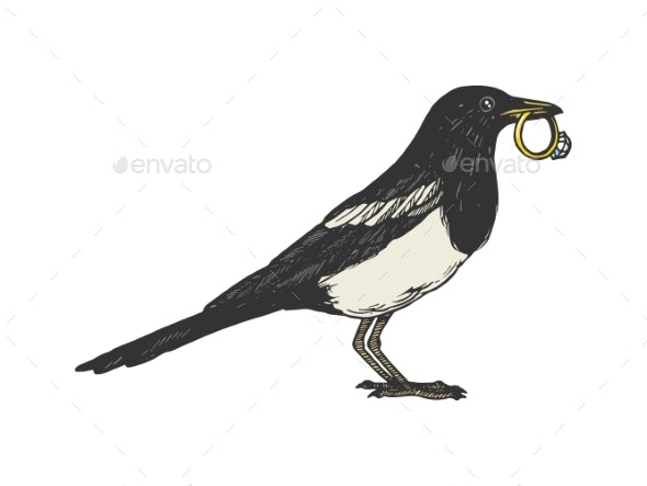Magpie Bird with Golden Ring Color Sketch Vector - Animals Characters