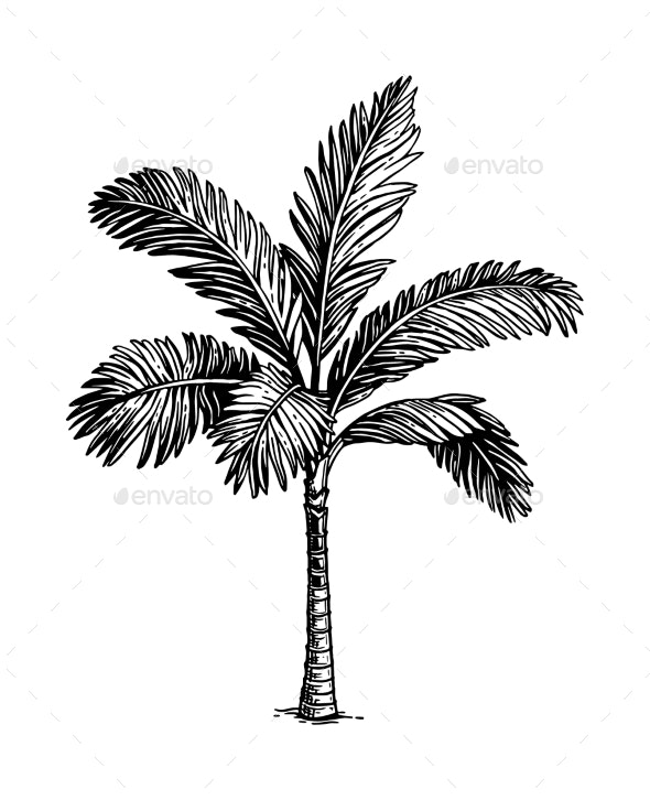 Ink Sketch of Palm Tree - Flowers & Plants Nature