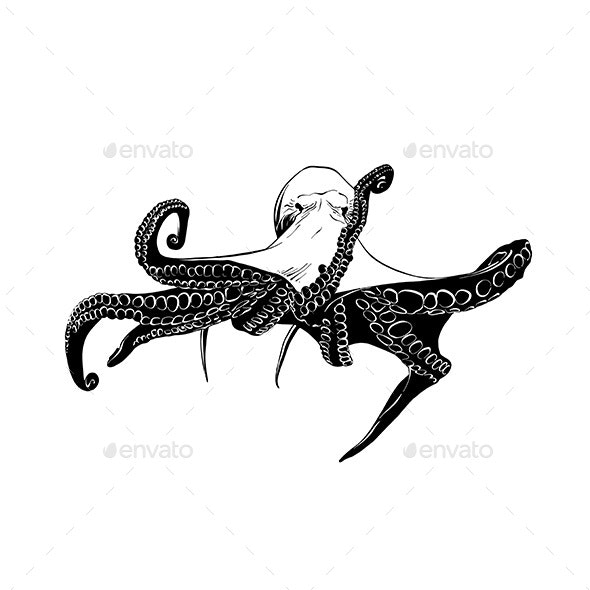 Hand Drawn Sketch of Octopus - Animals Characters