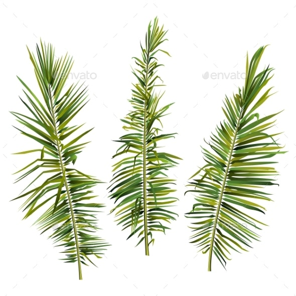 Set of Palm Tree Branches on White Background - Flowers & Plants Nature