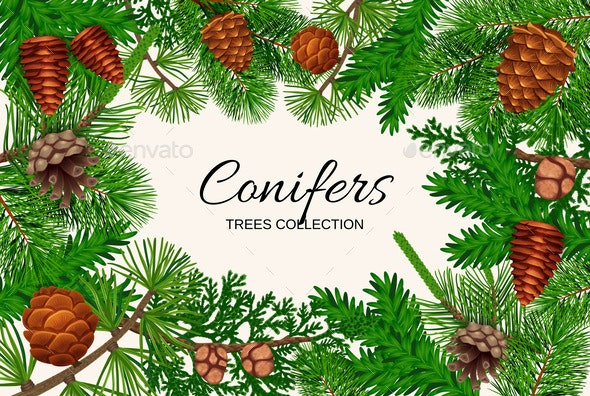 Conifers Trees Frame Composition - Flowers & Plants Nature