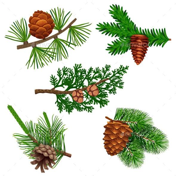 Conifer Cone Needle Set - Flowers & Plants Nature