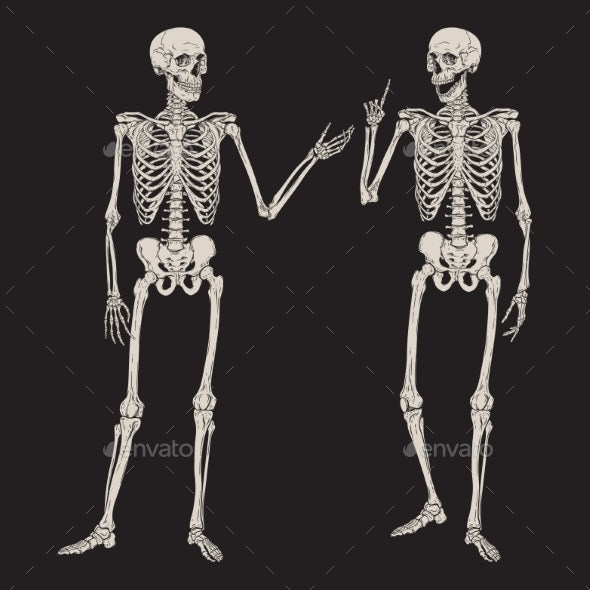 Human Skeletons Posing Isolated - Miscellaneous Vectors