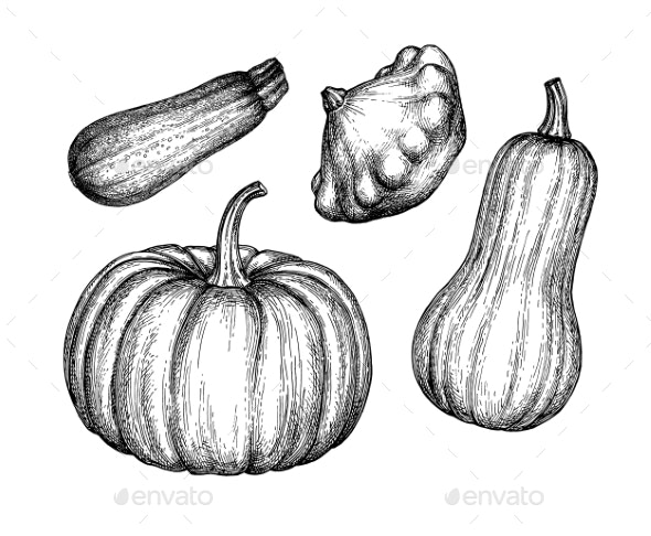 Ink Sketch of Squashes - Food Objects