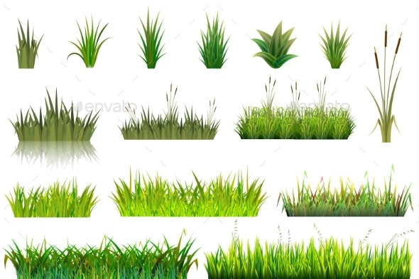 Grass Vectors - Flowers & Plants Nature