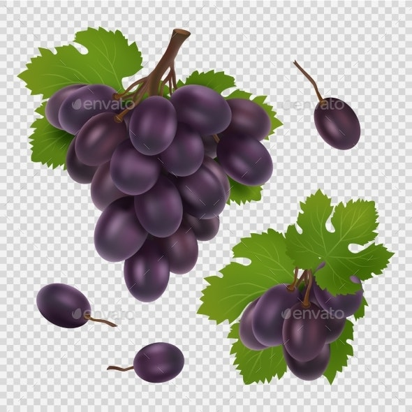 Black Grape Vector Illustration. Bunch of Grapes - Food Objects
